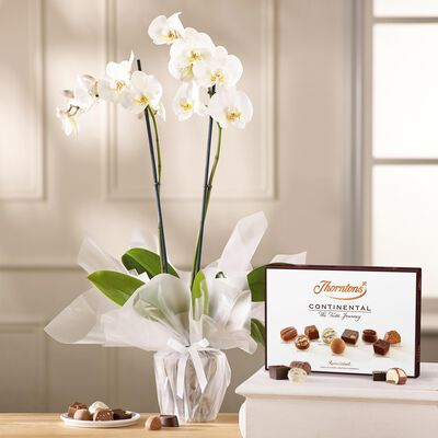 White Orchid and Continental Chocolate Box desktop