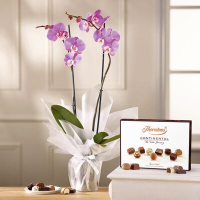 Lilac Orchid and Continental Chocolate Box desktop