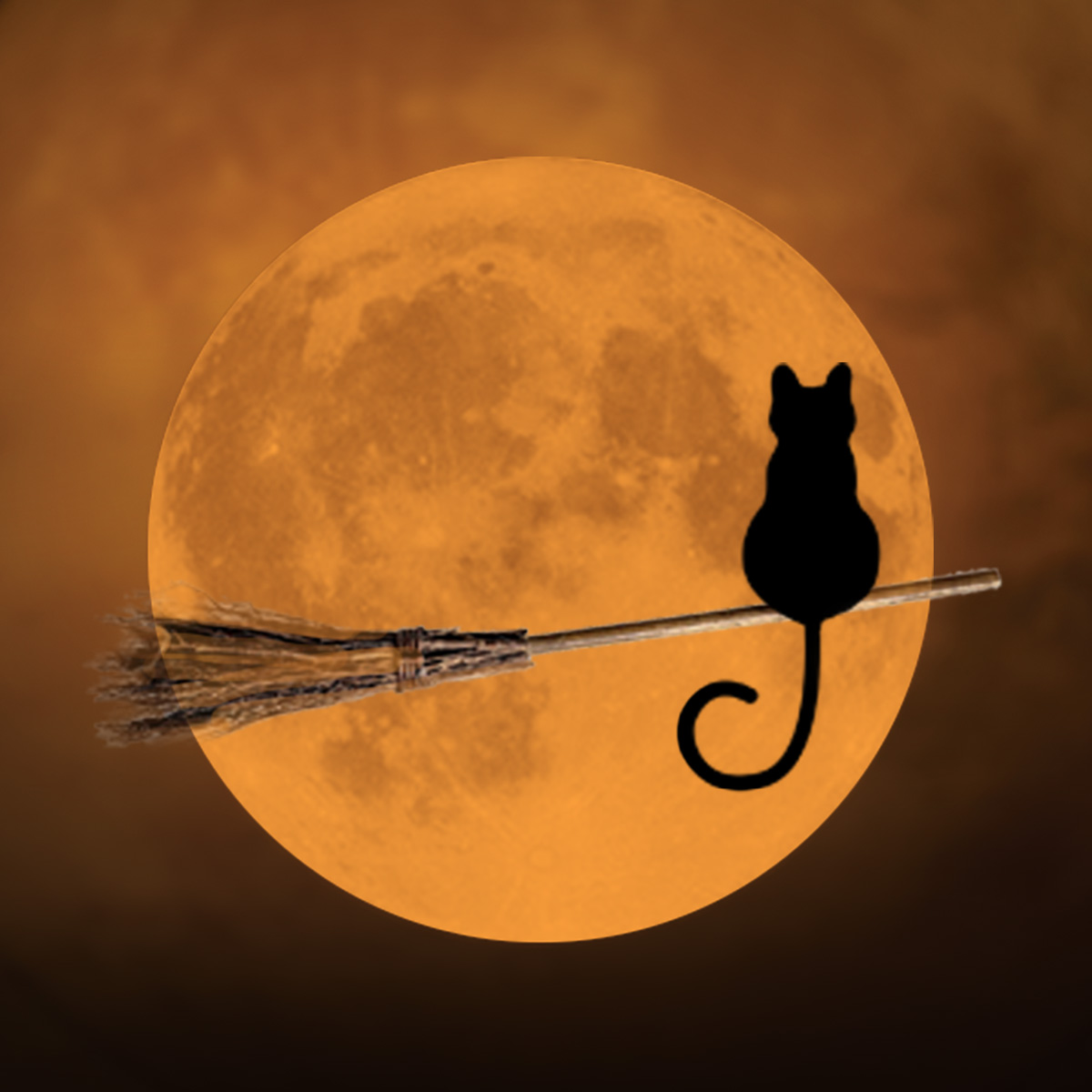 image of a cat sat on a broomstick watching the moon